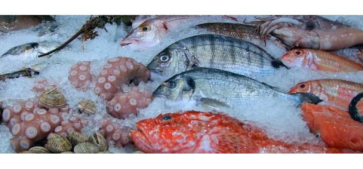 Subvenciones para promocionar productos de la pesca