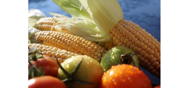 Bélgica detecta listeria en muestras de productos congelados