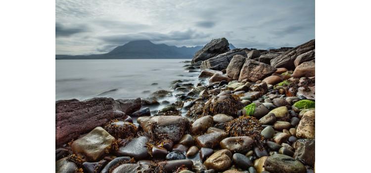 Finaliza el proyecto para revalorizar biomasa de algas desechada en acuicultura