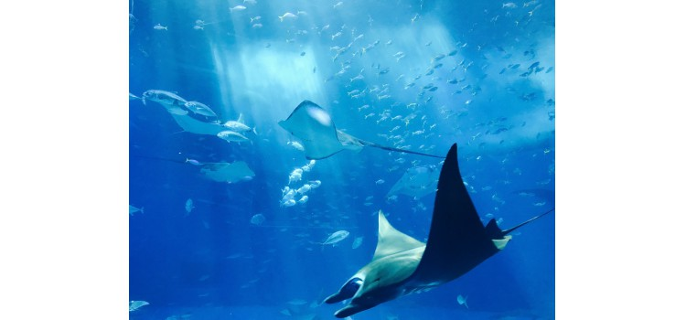 Know to Protect, proyecto por una pesca y acuicultura sostenible.