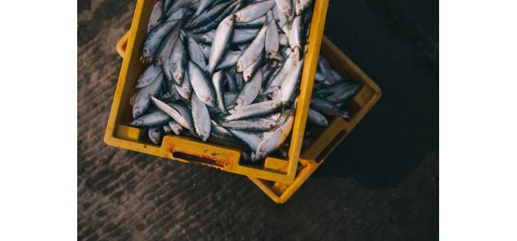 Un informe muestra que la mayoría de mercados municipales españoles incumplen la normativa de etiquetado de los productos pesqueros