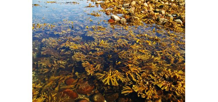 Normas para la explotación de algas