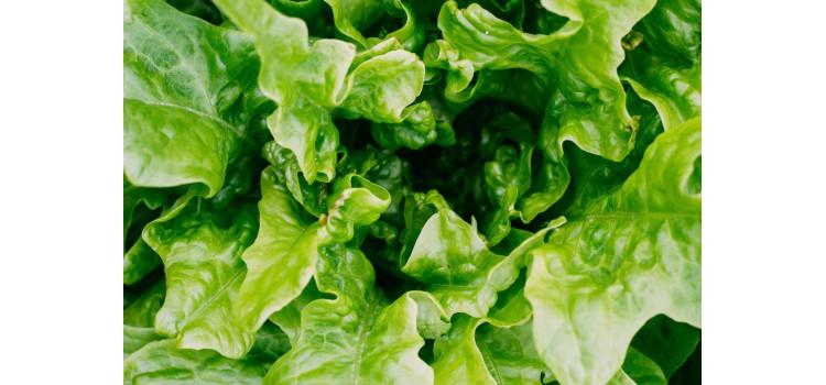 Florette retira varios productos por brote de E.coli