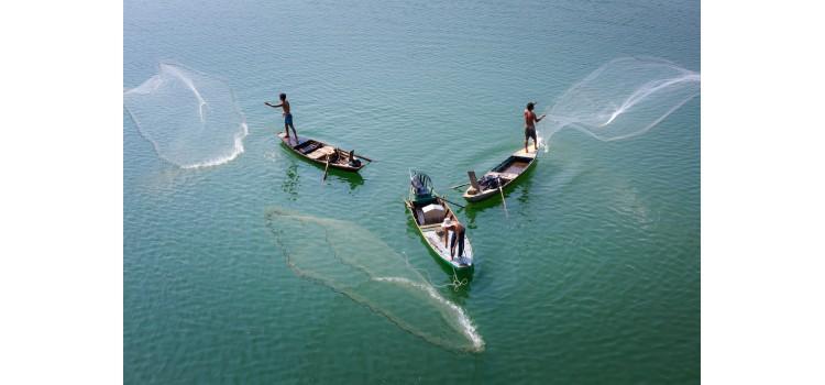 El LDAC opina sobre las mejores prácticas para la pesca de atún tropical