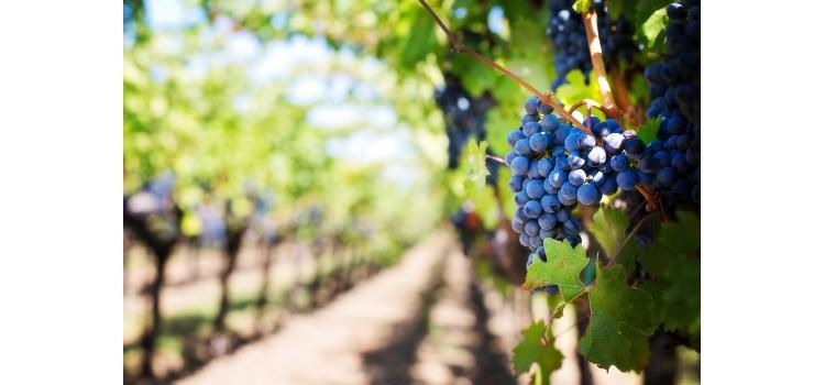 Se modifica el Real Decreto 1338/2018, de 29 de octubre, por el que se regula el potencial de producción vitícola.