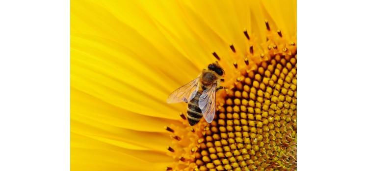 Reducción del uso de pesticidas para salvar a las abejas europeas