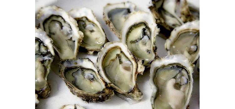 Alerta en Europa por marisco: más de 650 personas afectadas por ostras y mejillones contaminados