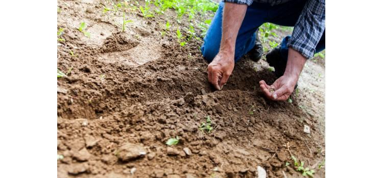 Convocadas las ayudas para transformación y comercialización de productos agrarios