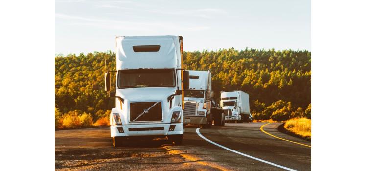 Nuevas medidas para el transporte de animales durante el estado de alarma