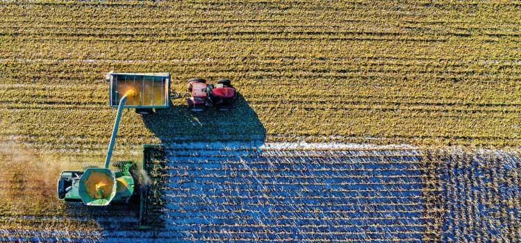 Informe anual de residuos de plaguicidas en alimentos correspondiente a 2018 publicado por EFSA
