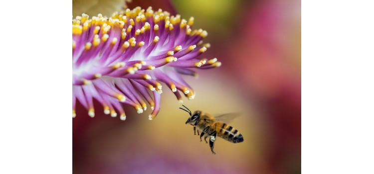Reglamento para impedir la introducción y propagación en la UE de cepas agresivas de polen y vegetales para evitar plagas